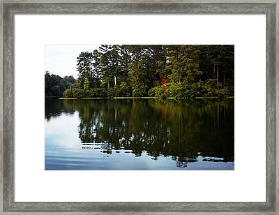 A Single Red Tree Framed Print by Parker Cunningham
