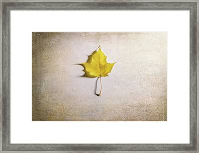 A Single Yellow Maple Leaf Framed Print by Scott Norris