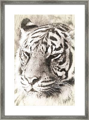 A Sketchy Tiger Framed Print by Clare Bevan
