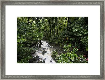 A Small River Flows Through A Dense Framed Print by Hannele Lahti