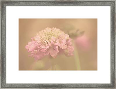A Soft Touch  Framed Print by Connie Handscomb
