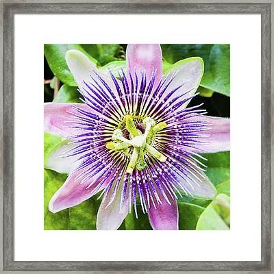 A Special Flower Framed Print by Dawn Currie