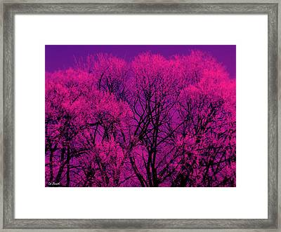 A Splash Of Purple Framed Print by Ed Smith