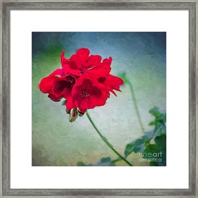 A Splash Of Red Framed Print by Betty LaRue