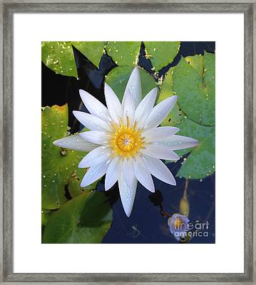 A Star Appears  Framed Print by Clay Cofer