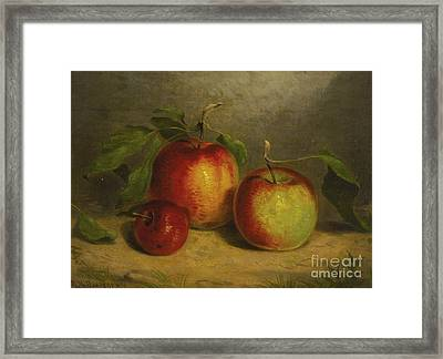A Study For Apples From Nature Framed Print by William Rickarby Miller