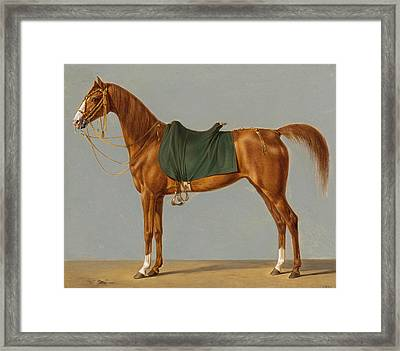 A Study Of A Horse Framed Print by German School