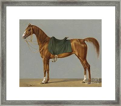 A Study Of A Horsegerman Framed Print by MotionAge Designs