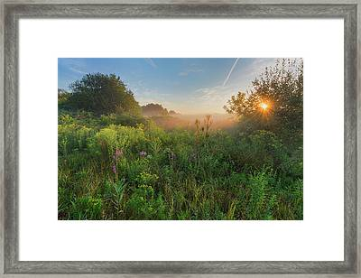 A Summer Morning 2016 Framed Print by Bill Wakeley
