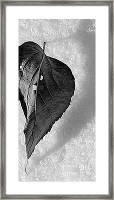 A Tattered Heart Framed Print by Julie Lueders