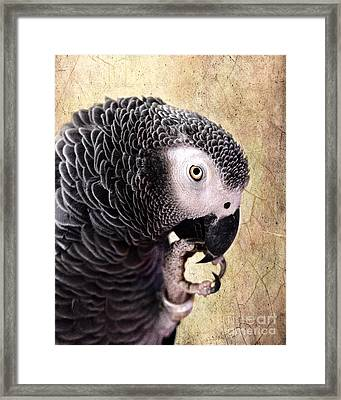 A Touch Of Grey Framed Print by Betty LaRue