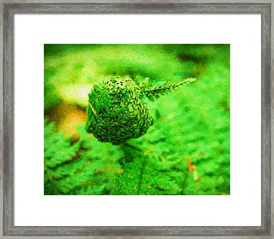A Touch Of Pine Framed Print by Dan Sproul