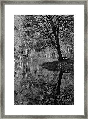 A Tree Of A Different Color Framed Print by Karol Livote