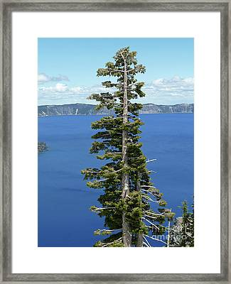A Tree With A View Framed Print by Methune Hively