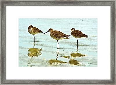 A Trio Framed Print by Christopher Holmes