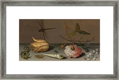 A Tulip, A Carnation, Spray Of Forget-me-nots, With A Shell, A Lizard And A Grasshopper, On A Ledge Framed Print by Balthasar van der Ast