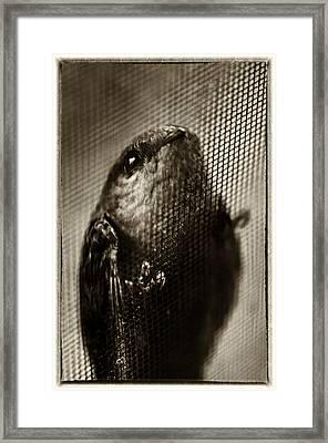 A Veiling View Framed Print by Scott  Wyatt