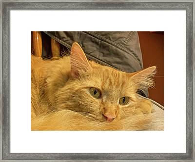 A Very Content Cat Framed Print by Guy Whiteley