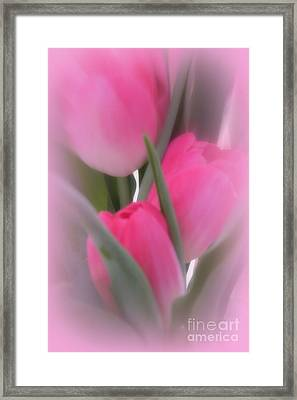 A Vision Of Pink Tulips Framed Print by Kay Novy