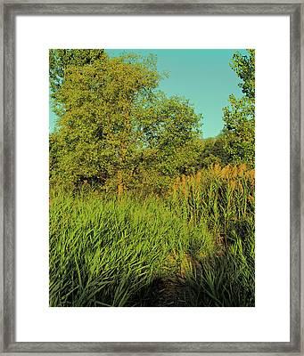 A Walk Amongst The Reeds Framed Print by David King