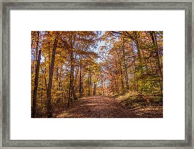 A Walk In The Woods Framed Print by Andrea Kappler