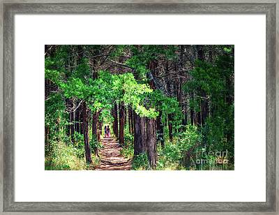 A Walk Into The Forest Framed Print by Tamyra Ayles