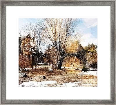 A Walk Through The Park Framed Print by Marcia Lee Jones