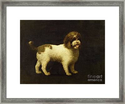 A Water Spaniel Framed Print by George Stubbs