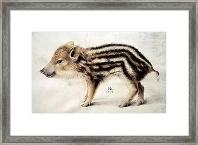A Wild Boar Piglet Framed Print by Hans Hoffmann