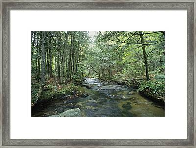 A Woodland View With A Rushing Brook Framed Print by Heather Perry