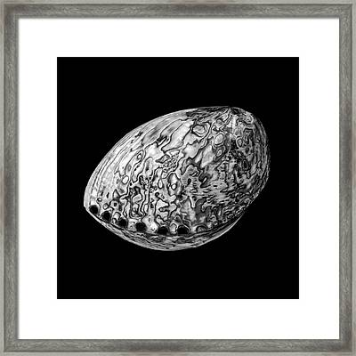 Abalone Sea Shell Framed Print by Jim Hughes