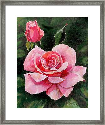 Abigail Rose Framed Print by Edward Farber