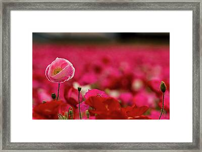 Above It All Framed Print by Jean Noren