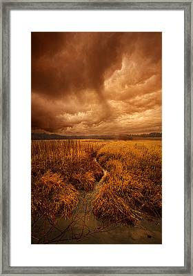 Absence Of Season Framed Print by Phil Koch