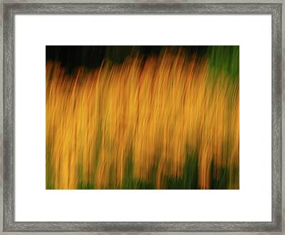Abstract Black Eyed Susan Field Framed Print by Juergen Roth