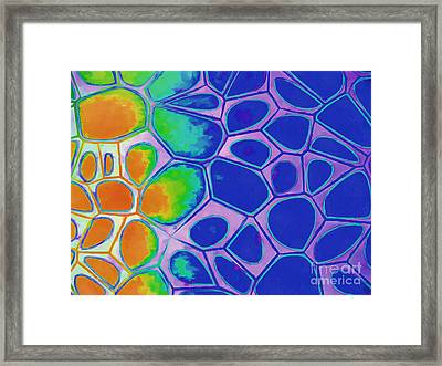 Abstract Cells 3 Framed Print by Edward Fielding