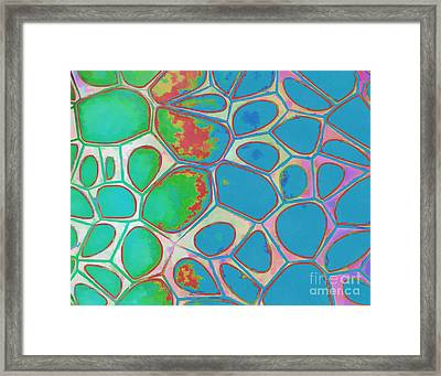 Abstract Cells 4 Framed Print by Edward Fielding