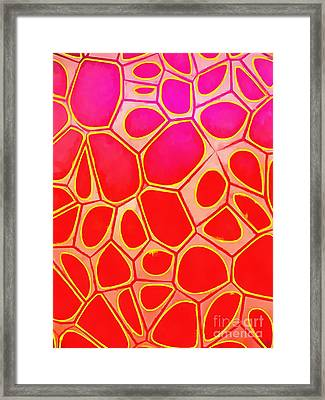 Abstract Cells 1 Framed Print by Edward Fielding
