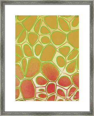 Abstract Cells 2 Framed Print by Edward Fielding