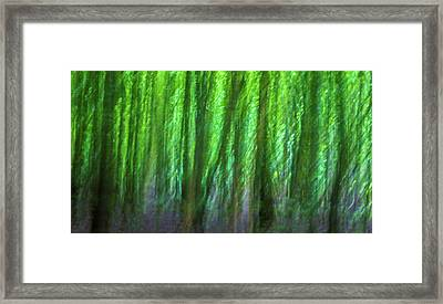Abstract Forest Framed Print by Martin Newman