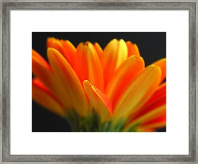 Abstract Gerbera Petals Framed Print by Juergen Roth