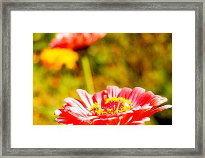 Abstract Zinnia Framed Print by Beth Collins
