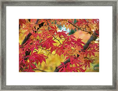 Autumn Fire Framed Print by Tim Gainey
