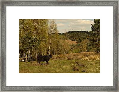 Admiring The Hills Framed Print by Adrian Wale
