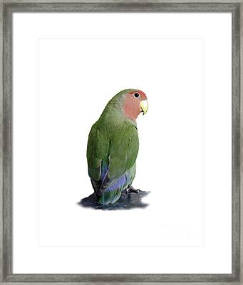Adorable Pickle On A Transparent Background Framed Print by Terri Waters
