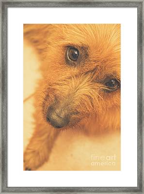 Adorable Small Pet Dog In Tones Of Red Framed Print by Jorgo Photography - Wall Art Gallery