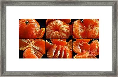 Adventures With A Mandarin Orange Framed Print by Nancy Mueller