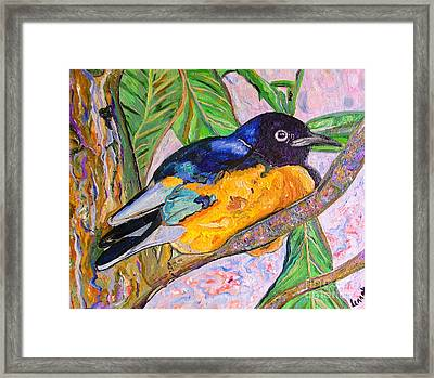 African Blue Eared Starling Framed Print by Heather Lennox