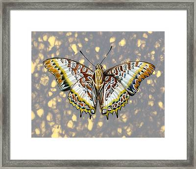 African Butterfly Framed Print by Mindy Lighthipe