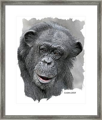 African Chimpanzee Framed Print by Larry Linton